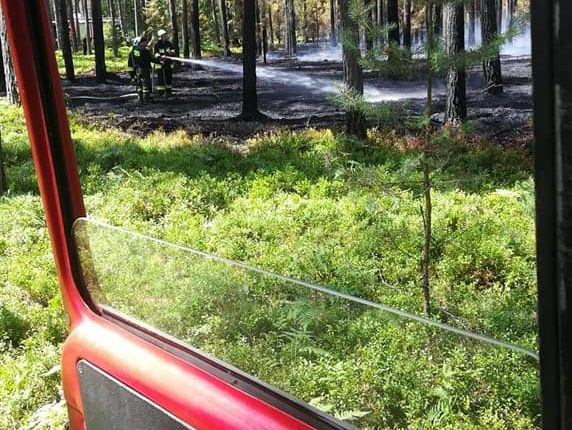 Palił się las