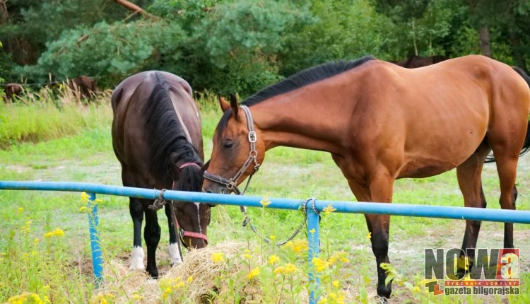 Konie ułani Biszcza Wojsko (1 of 6)
